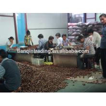 Exportador de castañas chinas