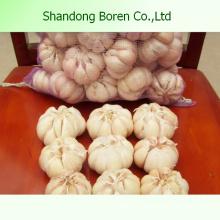Suministro de venta caliente de ajo blanco fresco