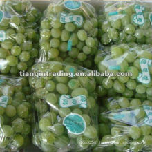 2012 crop green victoria uva
