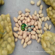 Новый урожай китайского свежего картофеля