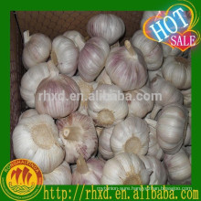 China White Fresh Garlic Manufacturer