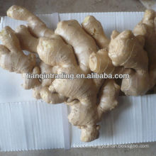 air dry ginger
