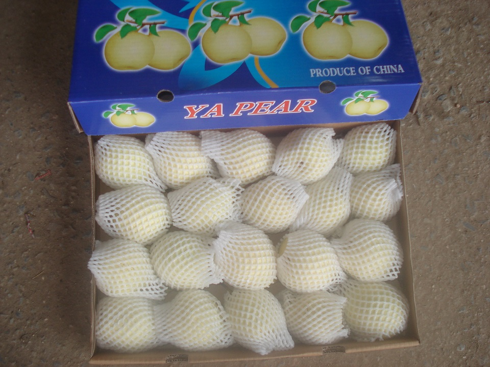fresh ya pear into 9kg carton