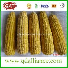 De alta calidad congelada maíz dulce integral COB
