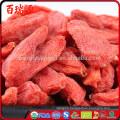 Goji seeds goji berry where to buy fresh goji berries