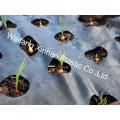 Weed Mat avec trous / Couvre-sol / Tissu d'aménagement paysager / Housse de jardin