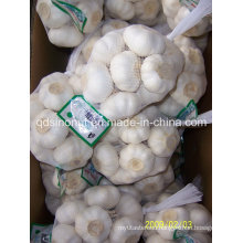 New Crop Pure White Garlic 500g