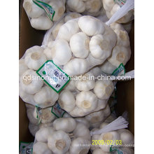 New Crop Alho Branco Puro 500g