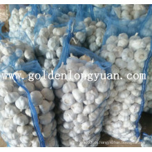 Frischer Knoblauch Professioneller Hersteller aus China