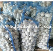 Fabricant professionnel d'ail frais en provenance de Chine