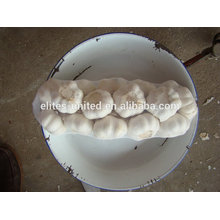 Alho branco
