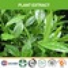 PLANT EXTRACT AND HERBAL EXTRACT