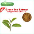 EGCG 40%, 45%, 50% với Caffeine thấp