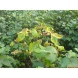 Bio-fungicide