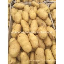 Nueva Patata de Shandong