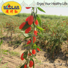 Medlar Lbp Organic Food Red Dried Goji Lycium
