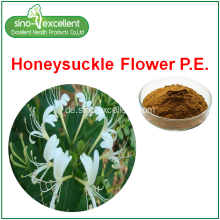 Honeysuckle Flower Extract Pulver
