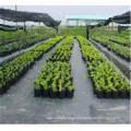Tela agrícola de la mala hierba / del paisaje, estera de Weed de los PP, cubierta de tierra de los PP