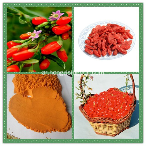 Raw Goji Berry for Goji Powder Production