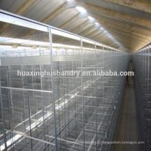 Cages à élevage automatique de poulets à fourrage