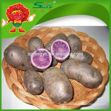 Фиолетовый сладкий картофель в сетчатой сумке