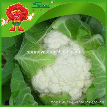 Beste weiße Blumenkohl