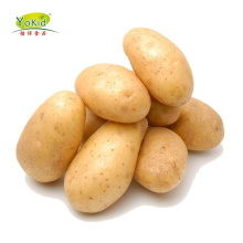 Price Of Fresh Potatoes Products China