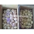 Nouvelle cire chinoise d'ail blanc pur
