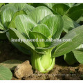 MPK02 Huawei heat resistant hybrid pakchoi seeds f1 for sales