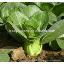 MPK02 Хуавей теплостойкость гибридных семян капуста китайская F1 для продажи