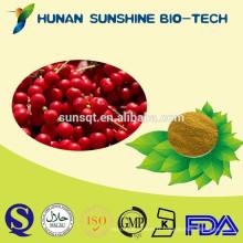 Sédatif fructus schisandrae chinensis fruit extrait poudre / durcissement amnésie schisandra PE