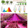 New Arrival LED GROW LIGHT with Dual Lens