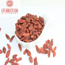 Goji Berry / Wolfberry / Low Price Goji bär