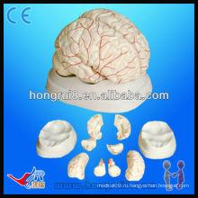 Высококачественная медицинская анатомическая модель мозговой и мозговой артерии человека Модель мозга человека