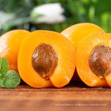 Premium Healthy Snack Roasted Salted Almond Kernels Nuts