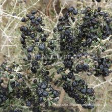 Medlar Orgánica seca de bayas de Goji Black Wolf Berry