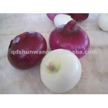 Cebolla amarilla fresca redonda china