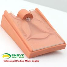 VENDEZ 12445 Modèle d'orientation contraceptive en science médicale pour l'école