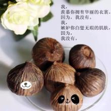 Single clove black garlic made of fresh one clove bulb garlic