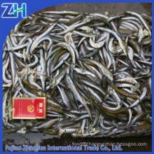 frozen fish bait sand lance