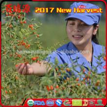 2017 nuevas frutas orgánicas secas wolfberry de la cosecha que adelgazan la cosechadora agrícola de la comida