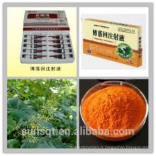 Extrait naturel de plante Pure extrait de fruit rose de Plumepoppy / extrait de Macleaya Cordata / extrait de Bocconia cordata