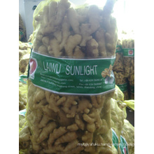 Laiwu New Crop Ginger