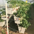 NFT Hydroponic Growing Gully for Greenhouse