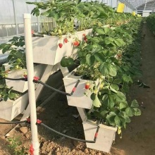 NFT Hydroponic Growing Gully para Invernadero