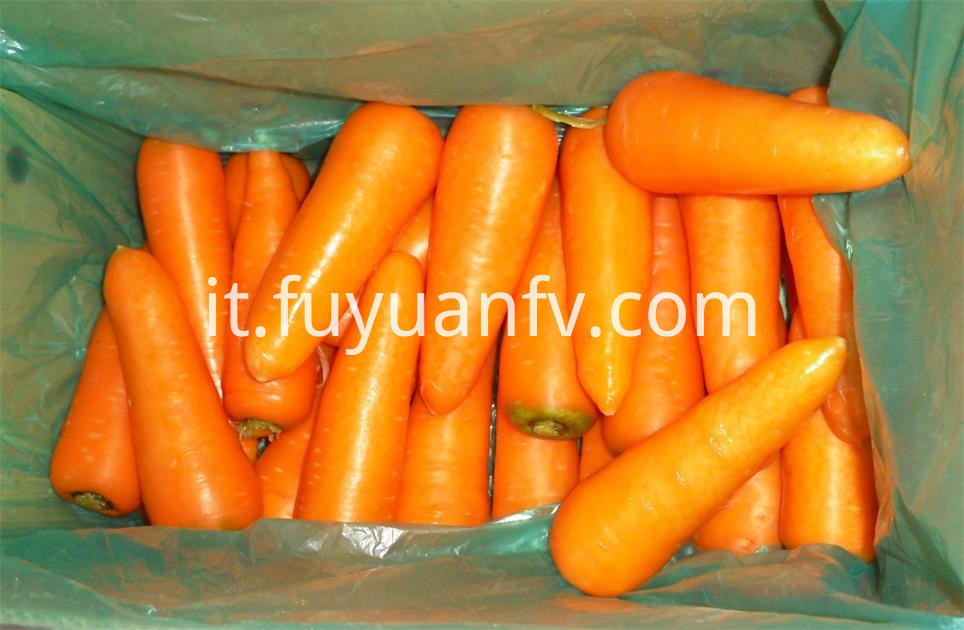Carrot For Export