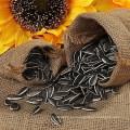 Nueva llegada no gmo semillas de girasol