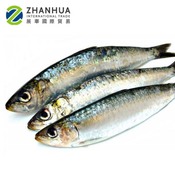 all types of price sea frozen fish seafood with bqf freezing process sardine