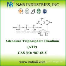 ATP Powder (Adenosine Triphosphate Disodium) CAS NO 987-65-5