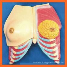 Модель женской груди для медицинского обучения